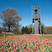 ARLINGTON, VIRGINIA - The Netherlands Carillon, a gift from the Netherlands to the United States in gratitude for assistance during World War II, stands in parkland near the Iwo Jima Memorial and Arlington National Cemetery. With 50 bells, it was installed in its current spot in 1960.