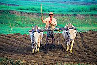 Plowing rice fields near Mandalay, Burma (Myanmar)