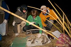 Matt, Nick & Greg With Geoffroy's Cat