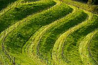 Benziger winery in Glen Ellen Ca., Sunday March 21, 2010..Photo Brian Baer