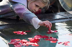 © Licensed to London News Pictures. 11/11/2016. London, UK. Jemila Vanderput, aged 7 (correct spelling) places a poppy in to the fountain during Silence in the Square, a service held in Trafalgar Square, London to mark Remembrance Day. A minutes silence is held on the 11th hour of the 11th day of the 11th month, to recall the end of hostilities of World War I.  Photo credit: Ben Cawthra/LNP