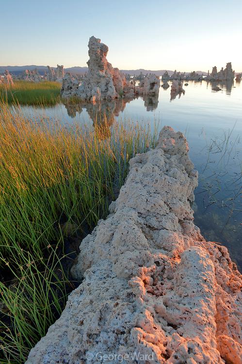 Tufa and Reeds at Sunrise, Mono Lake, Mono Basin National Forest Scenic Area, California