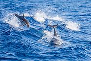 Aquatic Mammals of Mediterranean Sea