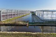 Nederland, Westland, 15-12-2018 Kas, kassen in het kassengebied van het westland. Er wordt groente in gekweekt. Het gebied tussen Naaldwijk en de kust is belangrijk vanwege de tuinbouw. Hier liggen de kassen tussen de rand van de bebouwde kom en de duinen, duingebied . Foto: Flip Franssen