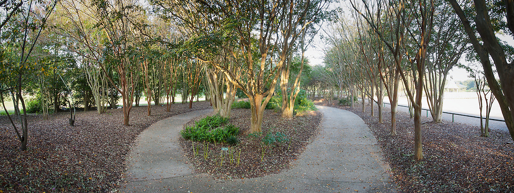 A paved trail winds through a alleyway of crape myrtle trees at BREC's Independence Park in Baton Rouge, La.