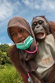 Three rescued orangutans return to freedom in the rainforest