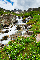 Waterfall and mountain streams, American Basin, San Juan Mountains (range of the Rocky Mountains), Southwest Colorado USA
