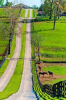 Thoroughbred horses, Woodstock Farm, Lexington, Kentucky USA.