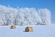 Bales and hoarfrost<br /> Hazelglen<br /> Manitoba<br /> Canada