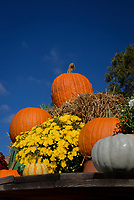 Pumpkins and chrysanthemum plants on display at a roadside produce stand.