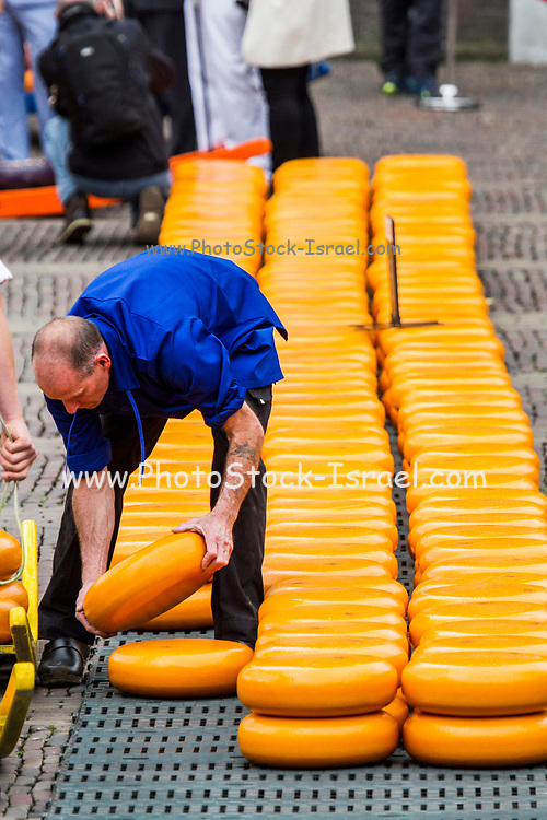 Buying and selling wheels of Gouda cheeses, at Alkmaar Cheese Market,  Noord-Holland, Netherlands
