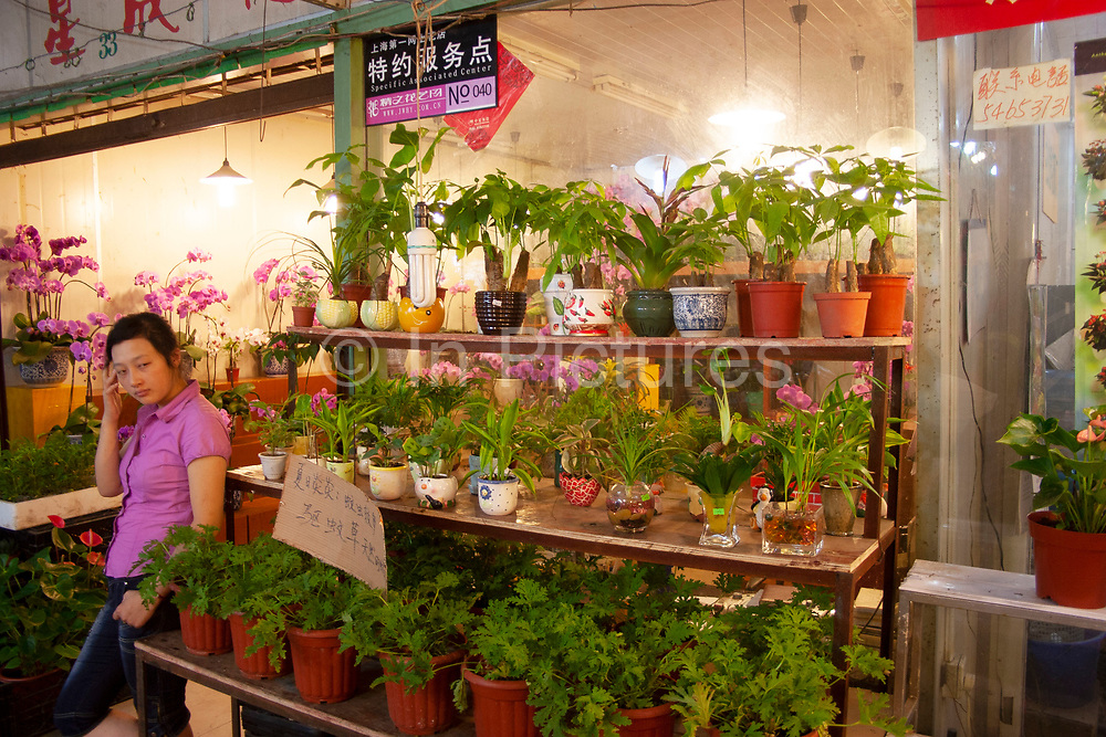 Shanghais old flower market off Rejin Lu, in Shanghai, China. This excellent flower market which sells fresh flowers on the ground floor and fake flowers upstairs is situated in an old communist party building. Sellers and arrangers work through the heat and cold in this exposed building, moving flowers at unbelievably low prices compared to this trade in the West.