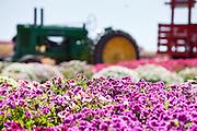 California Spring Flowers