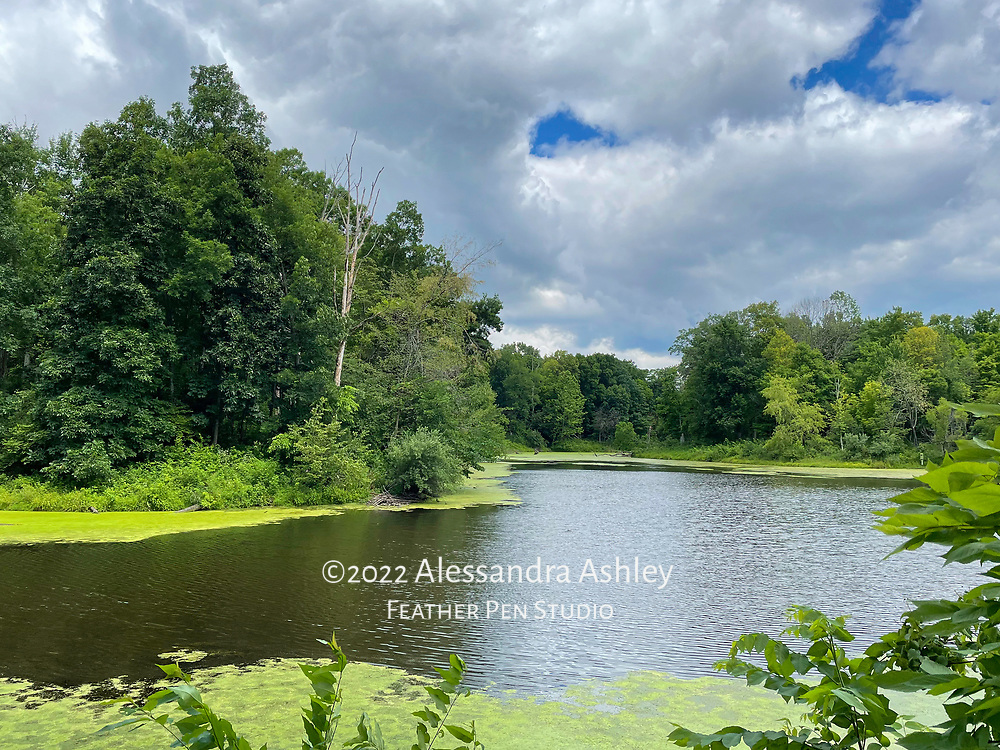 Vista from wildlife viewing blind at Char-Mar Ridge Park, Delaware County, Ohio. Captured on iPhone 12 Pro, because the best camera is the one you have with you!