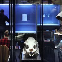 Nederland, Amsterdam , 19 maart 2014.<br /> Artis stelt vandaag het Aquarium ter beschikking als stembureau voor de Gemeenteraadsverkiezingen.<br /> Foto:Jean-Pierre Jans