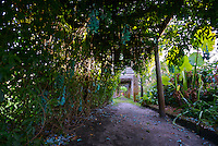 View of Pergola in Miami Fairchild Tropical Garden,
