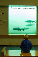 Young boy watching salmon salmon as seen through the viewing windows at Bonneville Dam on the Columbia River, OR.