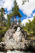 A ponderosa pine (Pinus ponderosa) perched on a boulder at the confluence of Eureka Creek and Lost River along Monument Creek Trail, Pasayten Wilderness, Washington.