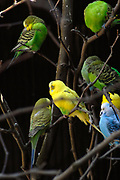 Avifauna, Europa's grootse vogelpark. / Avifauna - the largest bird sanctuary in Europe Op de foto/ On the Photo: Parkieten / Parakeet