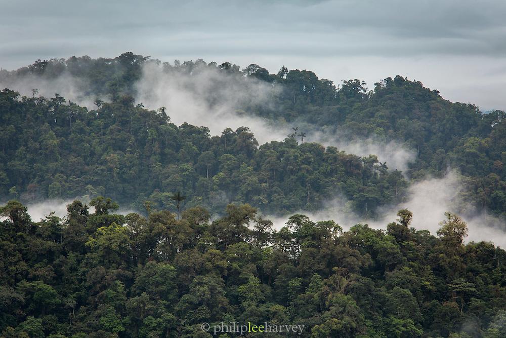 Cloud Forest, Mashpi Reserve, Distrito Metropolitano de Quito, Ecuador