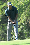 ST. LOUIS, MO - AUGUST 09: Tiger Woods watches his putt on the #10 green during the first round of the PGA Championship on August 09, 2018, at Bellerive Country Club, St. Louis, MO.  (Photo by Keith Gillett/Icon Sportswire)