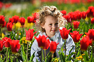 15th April. <br />Parker Ioannou Age - 2<br />enjoys the Tulips at Stanley Park Blackpool