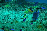 Doc Paulson, Grand Cayman