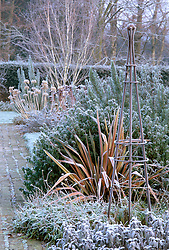 Helen Yemm's garden at Ketley's in winter. Metal obelisk, phormium, agapanthus seed heads and silver birch providing structure