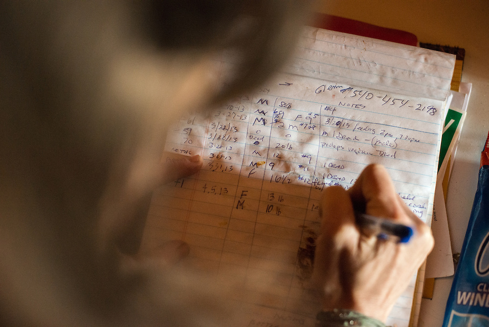 Kate Emanuel makes notations in a log on a new lamb that was born at the Stone Leigh Knoll Farm in Purcellville, Virginia April 6, 20013.