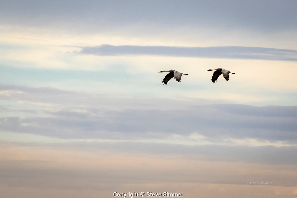 I felt fortunate to catch these two in snychronzed mode flying through this beautifully and subtly colored sky.