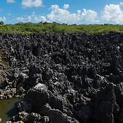 Grand Cayman Hell Limestone Landscape
