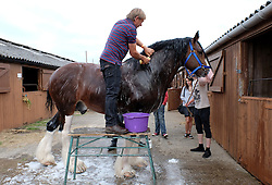 © Licensed to London News Pictures.14/07/15<br /> Harrogate, UK. <br /> <br /> A horse is washed down and prepared on the opening day of the Great Yorkshire Show.  <br /> <br /> England's premier agricultural show opened it's gates today for the start of three days of showcasing the best in British farming and the countryside.<br /> <br /> The event, which attracts over 130,000 visitors each year displays the cream of the country's livestock and offers numerous displays and events giving the chance for visitors to see many different countryside activities.<br /> <br /> Photo credit : Ian Forsyth/LNP