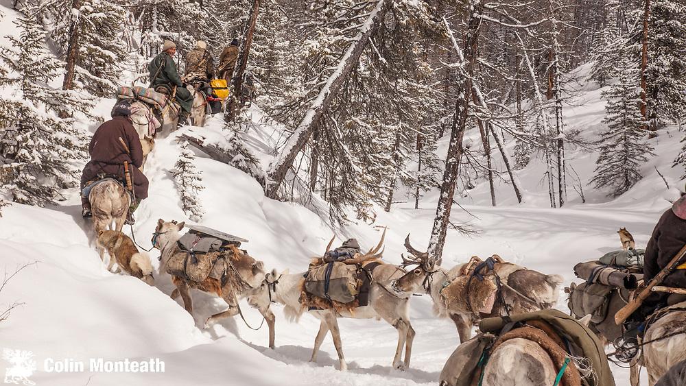 Tsaatan reindeer herders, leave winter camp, Hunkher mountains, northern Mongolia