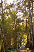 Couple hiking along path through eucalyptus trees in afternoon sunlight in Berkeley, California, USA