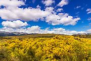 Wildflowers on rolling hills above Lake Te Anau, South Island, New Zealand