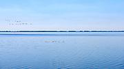Zwerm vogels boven de Oosterschelde bij de Oesterdam, dam tussen Tholen en Zuid-Beverland. Het is de langste dam (10,5 kilometer) van de Deltawerken. - Swarm birds above the Oosterschelde near the Oesterdam, the longest dam of the Delta Works in the Netherlands