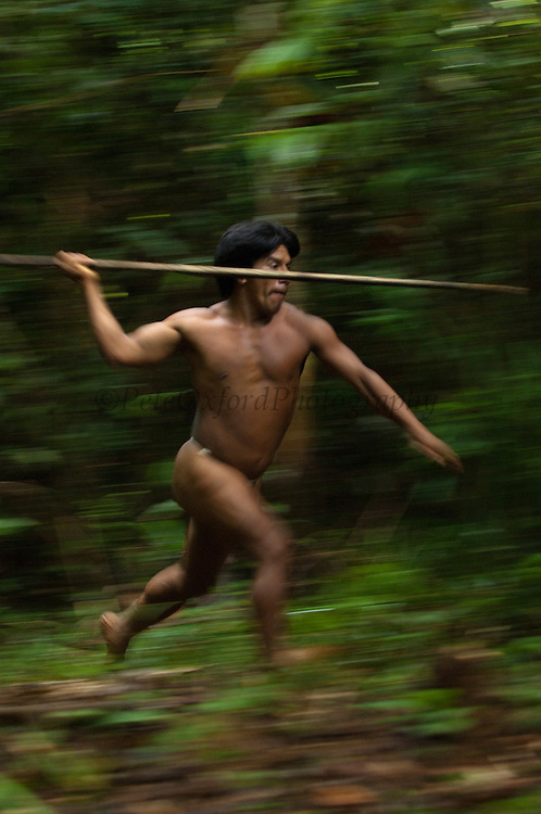 Namo Yate hunting with a lance which is made from the stem of a palm tree. Large terrestrial game like peccaries and tapir are hunted in this way.<br /> Bameno Community. Yasuni National Park.<br /> Amazon rainforest, ECUADOR.  South America<br /> This Indian tribe were basically uncontacted until 1956 when missionaries from the Summer Institute of Linguistics made contact with them. However there are still some groups from the tribe that remain uncontacted.  They are known as the Tagaeri & Taromenane. Traditionally these Indians were very hostile and killed many people who tried to enter into their territory. Their territory is in the Yasuni National Park which is now also being exploited for oil.