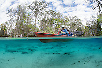 A family with child in one of the kayaks explores the natural freshwater springs on a cool winter day. Horizontal orientation split image. Three Sisters Springs, Crystal River National Wildlife Refuge, Kings Bay, Crystal River, Citrus County, Florida USA.