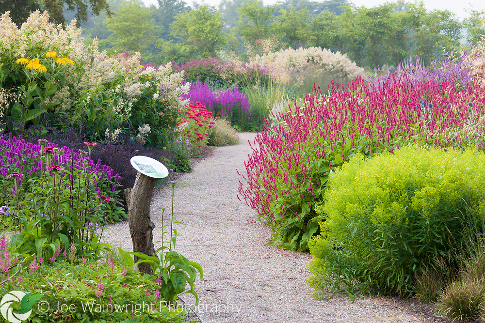 A path through the Floral Labyrinth at Trentham Gardens, Staffordshire, designed by Piet Oudolf. Photographed in summer planting includes Solidago, Monarda, Lythrum, Stipa gigantea Agastaches and Astilbes