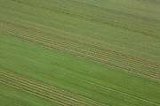 Nederland, Flevoland, Zuidelijk Flevoland,  08-09-2009. Het maaien van gras met heeft geometrische patronen in het grasland doen ontstaan.Cutting grass with a tractor creates geometric patterns in the grassland .luchtfoto (toeslag); aerial photo (additional fee required); .foto Siebe Swart / photo Siebe Swart