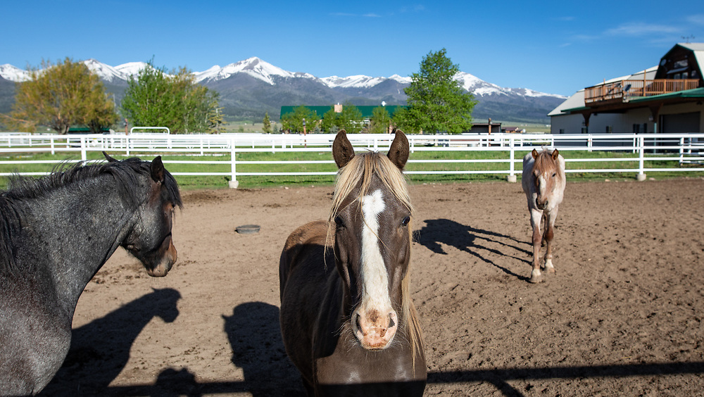 Nakota horses wait for their next adventure in a paddock at A Painted View Ranch.