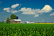 Corn field and old barn<br />Elmvale<br />Ontario<br />Canada