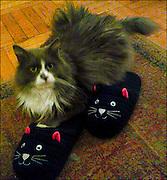 Cat Slippers / Catalog #224