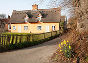 Pretty ochre coloured historic thatched cottage in the village of Ufford, Suffolk, England