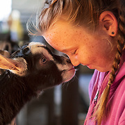 Morgan Franseen lets one of her baby goats greet her at her family's goat milk farm, Friendly Franseen Acres, in Poplar Grove, Illinois. Nathan Lambrecht/Journal Communications