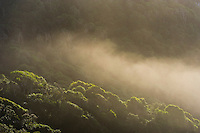 Sea mist drifting in over coastal forest, Tsitsikamma Marine Protected Area, Garden Route National Park, Eastern Cape, South Africa,