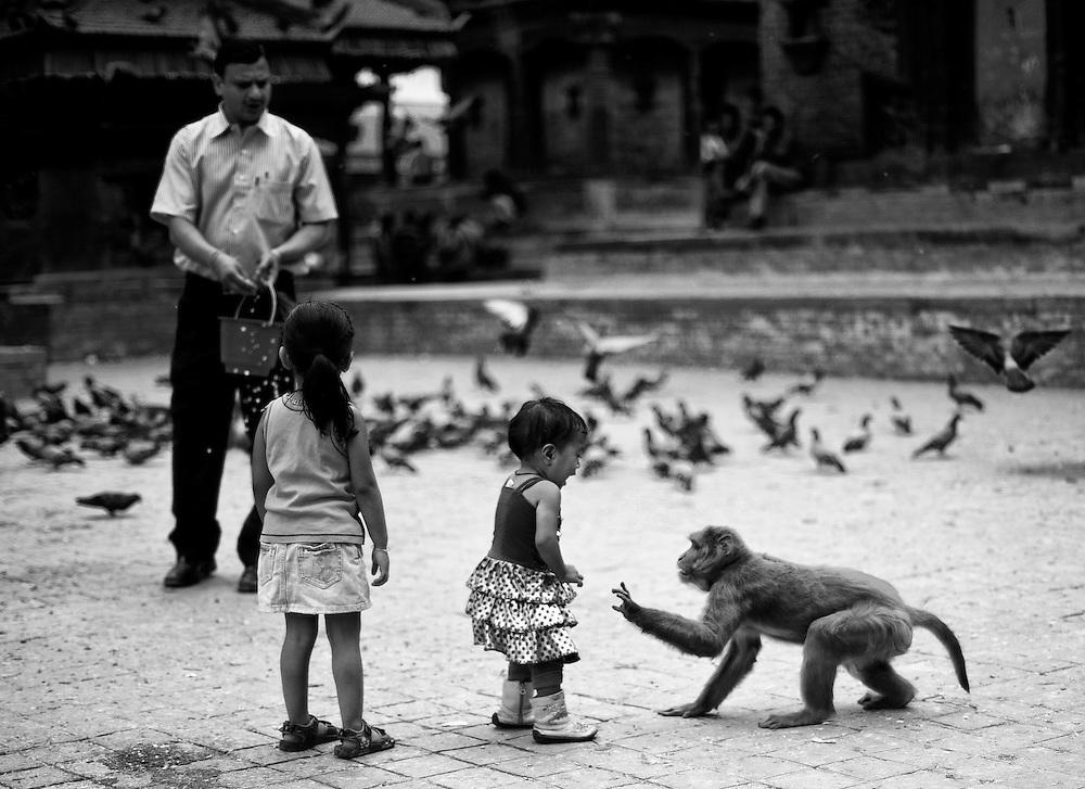 Humans, doves and monkeys in Kathmandu