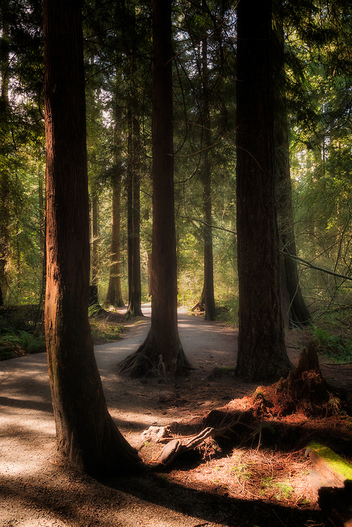 A woodland path, bathed in light and shadows, solitude and tranquility,