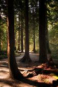 Trees & Woodlands