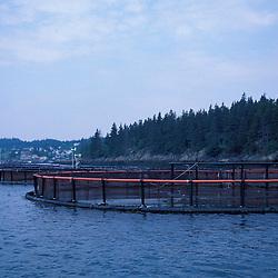 Cutler, ME. Atlantic Salmon farming. Salmon pens.